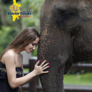 Phuket Elephant Santuary with South Tours