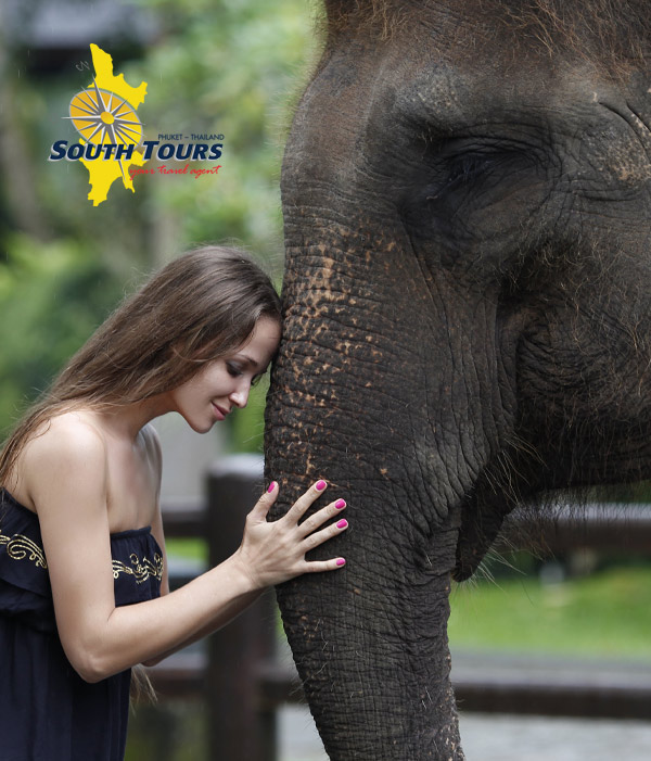 Phuket Elephant Santuary with South Tours